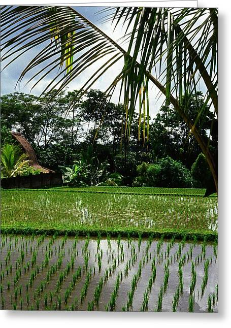 Rice Fields Bali Greeting Card by Juergen Weiss