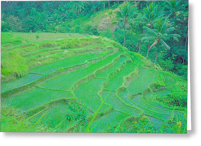 Rice Fields In Indonesia Greeting Card
