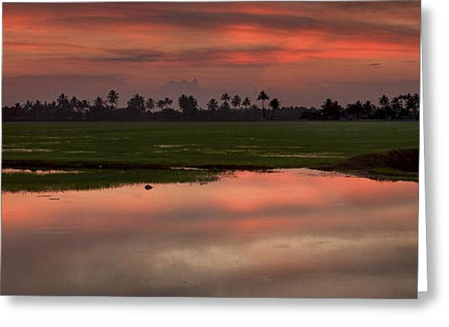 Rice Fields Of India Greeting Card