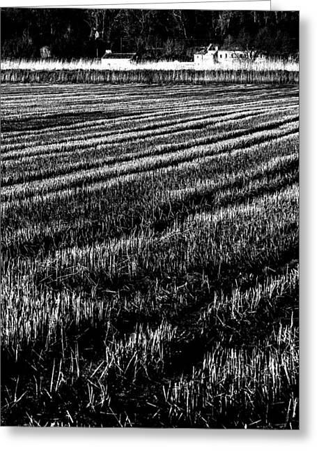 Rice Paddies Greeting Card by Edgar Laureano
