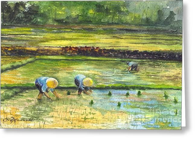 The Rice Paddy Field Greeting Card by Carol Wisniewski