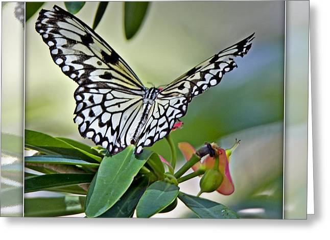 Rice Paper Butterfly 2b Greeting Card