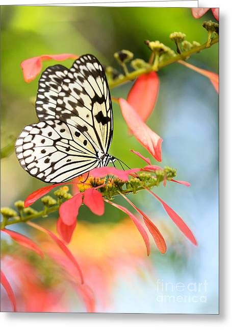 Rice Paper Butterfly In The Garden Greeting Card