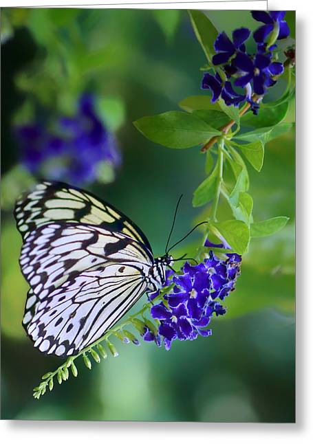 Rice Paper Butterfly Greeting Card by Nikolyn McDonald