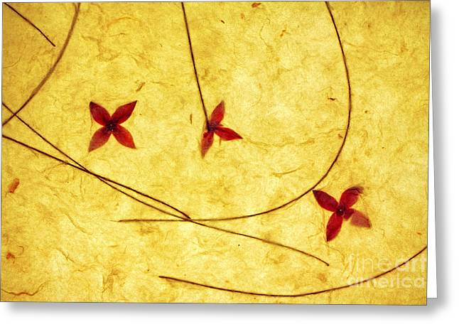 Rice Paper Wildflower Yellow Greeting Card by Charline Xia