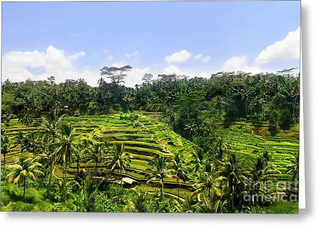Rice Terrace In Bali Greeting Card by Lars Ruecker