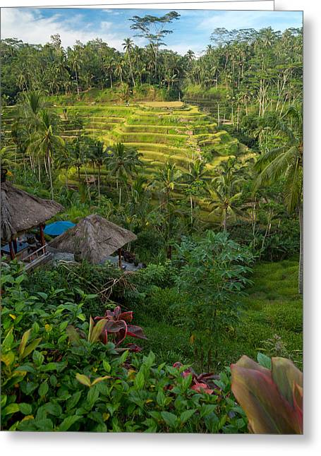 Greeting Card featuring the photograph Rice Terraces - Bali by Matthew Onheiber