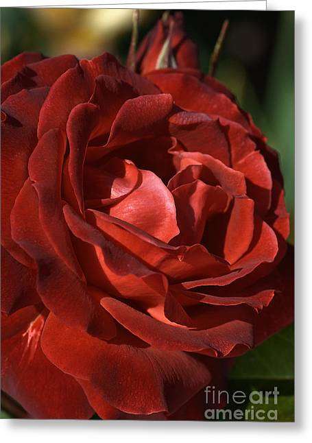Greeting Card featuring the photograph Rich Is Rose by Joy Watson