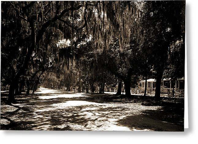 Ridgewood Ave, Daytona, Fla, Roads, Spanish Moss Greeting Card by Litz Collection
