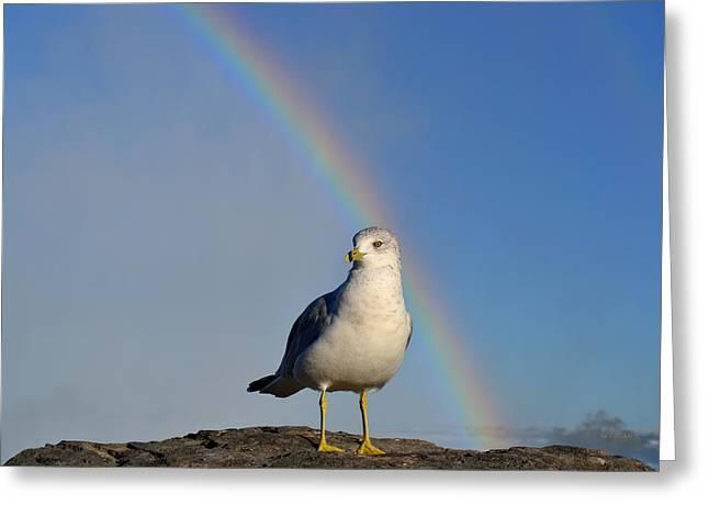 Ring Billed Seagull At Niagara Falls Greeting Card
