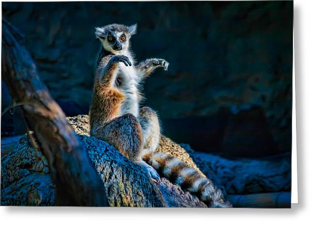 Ring-tailed Lemur Greeting Card by Tim Stanley