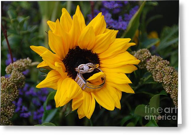 Rings On A Sunflower Greeting Card by Mark McReynolds