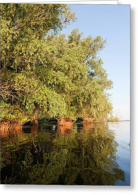 Riparian Forest In The Danube Delta Greeting Card by Martin Zwick