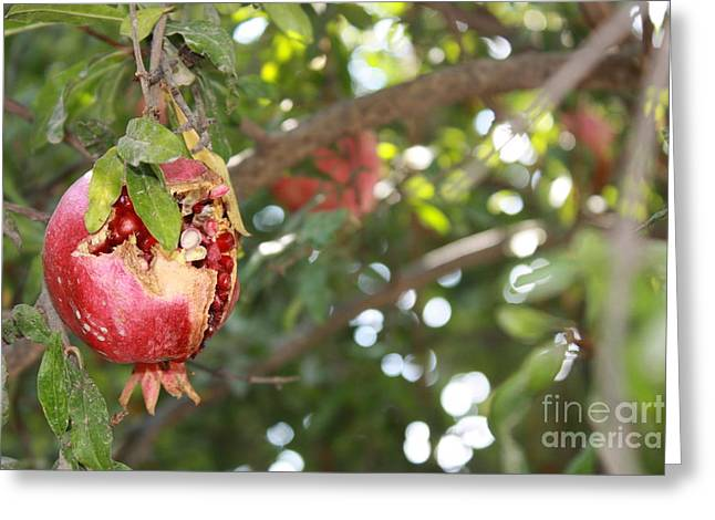 Ripe Pomegranate Greeting Card by Julie Alison