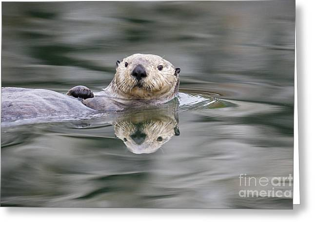 Ripples And Reflections Greeting Card by Tim Grams