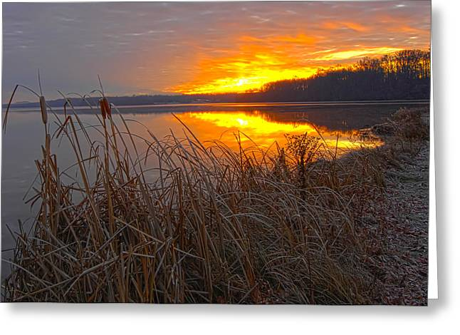 Greeting Card featuring the photograph Rising Sunlights Up Shore Line Of Cattails by Randall Branham