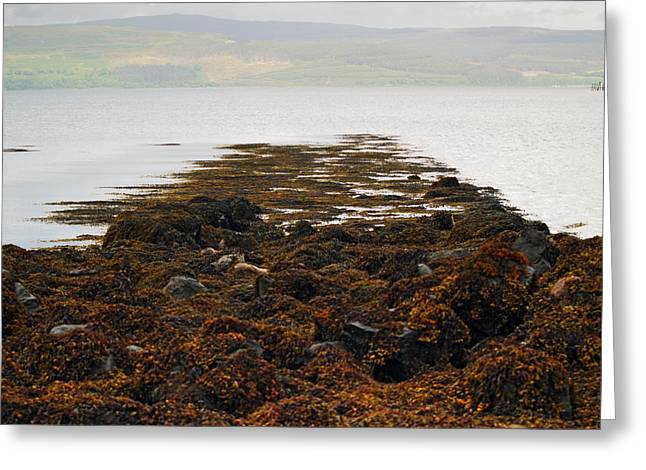 Rising Tide Greeting Card by Steve Watson