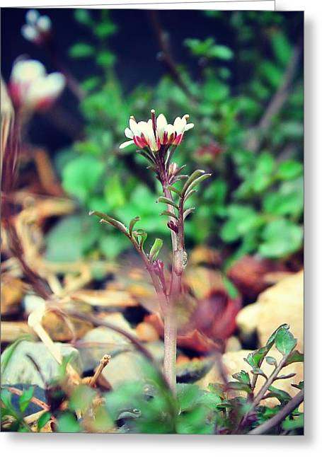 Greeting Card featuring the photograph Rising Wildflower by Candice Trimble