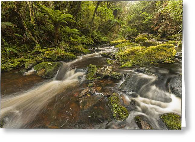 River At Mcleans Falls After Rains Greeting Card by Colin Monteath
