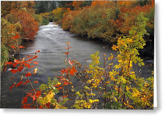 River Color Greeting Card by Leland D Howard