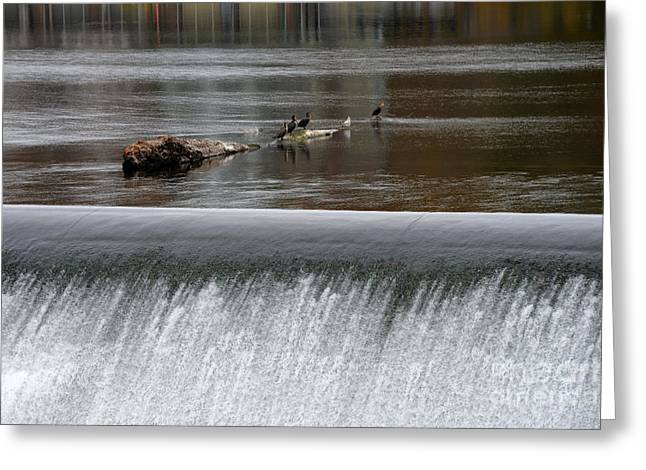 River Dam Greeting Card by Mark Ayzenberg