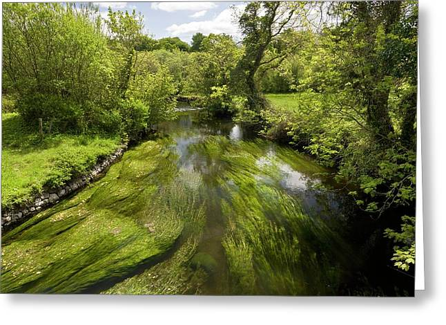 River Fergus Greeting Card by Bob Gibbons
