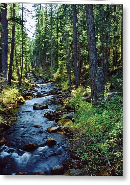 River Flowing Through A Forest, South Greeting Card