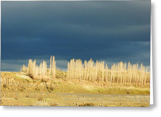 River Poplars Greeting Card