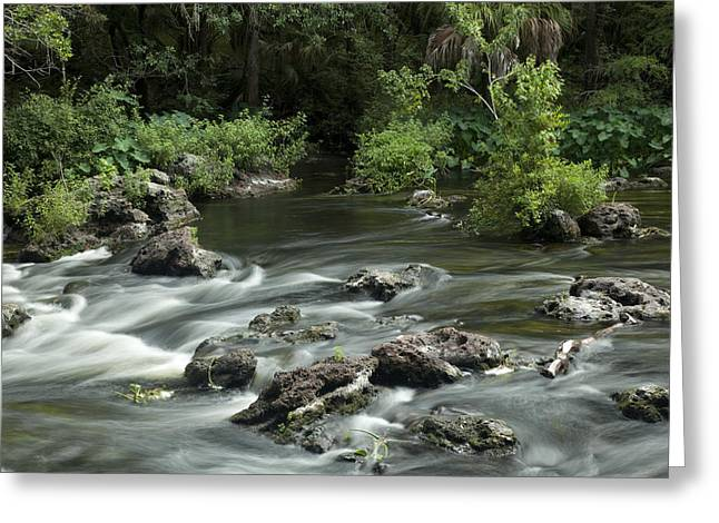 River Rapids Greeting Card by Robert Anderson