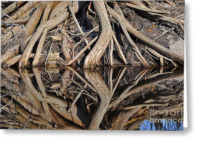 River Roots Greeting Card by Al Powell Photography USA