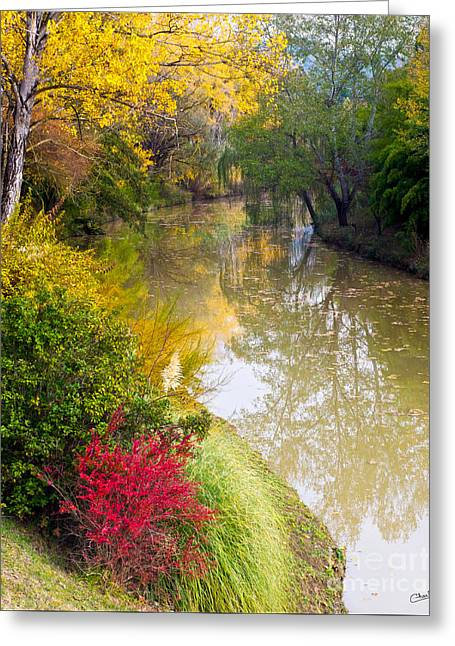 River With Autumn Colors Greeting Card
