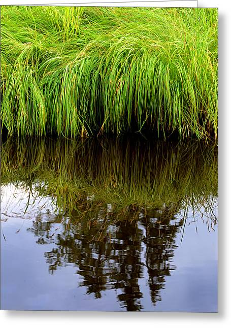 Riverbank Wild Grass Greeting Card