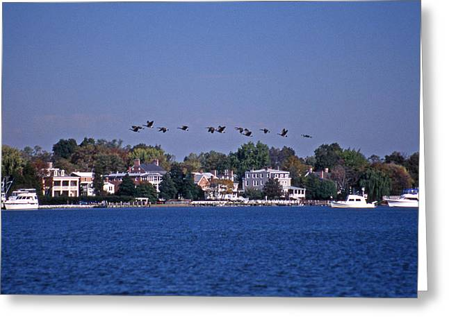 Riverfront Geese Greeting Card by Skip Willits