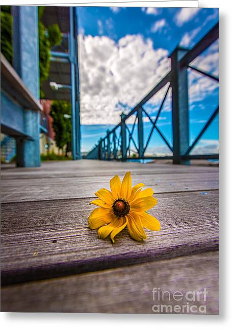 Riverwalk Fallen Greeting Card by Andrew Slater