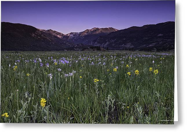 Rmnp Moraine Park Flora Sunrise Greeting Card by Tom Wilbert