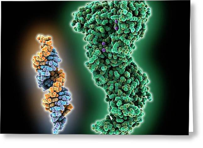 Rna Interference Molecules Greeting Card by Laguna Design