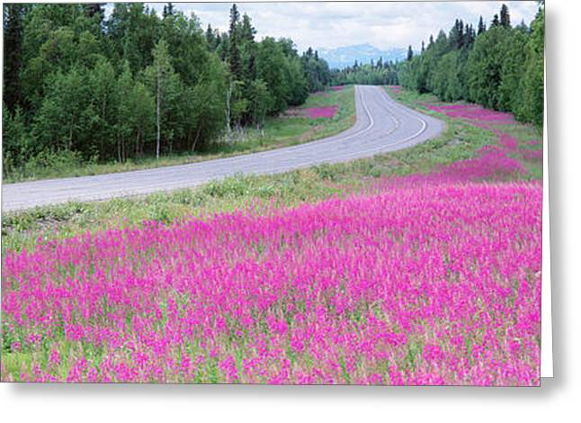 Denali National Park Greeting Cards - Road Ak Greeting Card by Panoramic Images