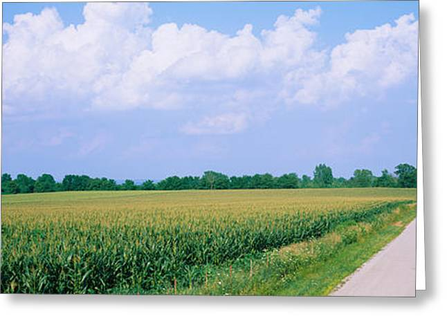 Road Along Corn Fields, Jo Daviess Greeting Card by Panoramic Images