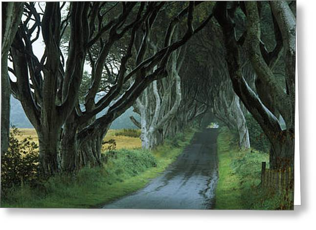 Road At The Dark Hedges, Armoy, County Greeting Card by Panoramic Images