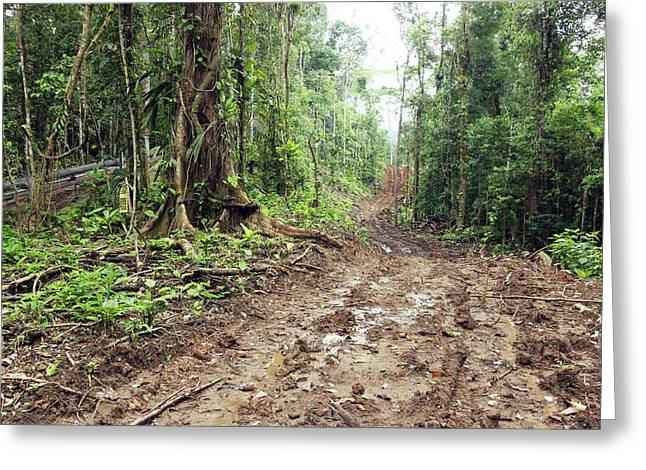 Road Construction In The Amazon Greeting Card by Dr Morley Read