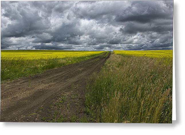 Road Going Through A Canola Field In Southern Alberta Greeting Card