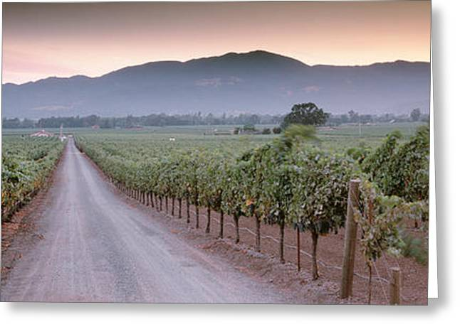 Road In A Vineyard, Napa Valley Greeting Card by Panoramic Images