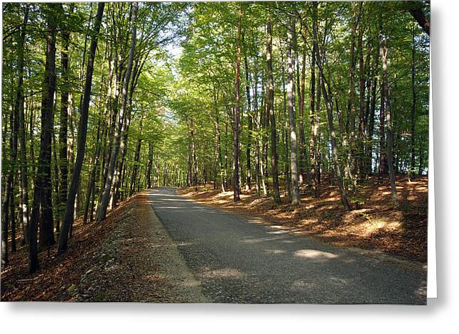 Road In Forest  Greeting Card by Ioan Panaite