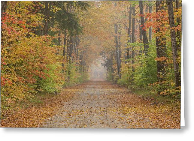 Road Passing Though Forest In Autumn Greeting Card