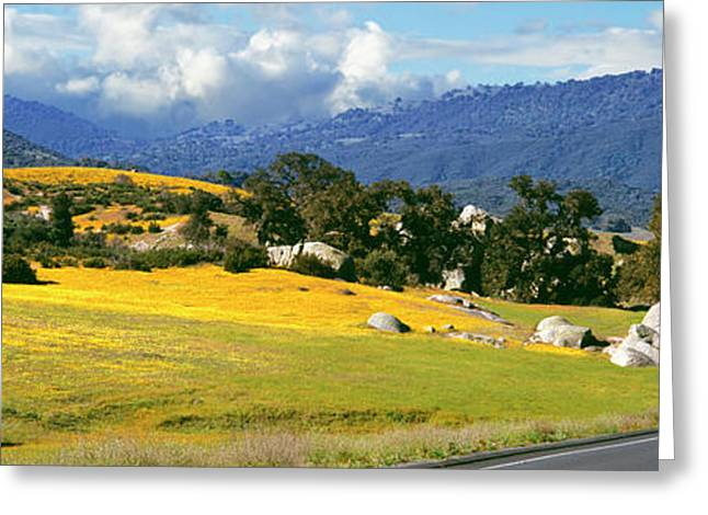 Road Passing Through A Field, U.s Greeting Card by Panoramic Images