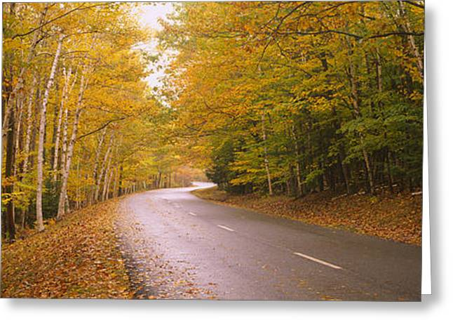 Road Passing Through A Forest, Park Greeting Card by Panoramic Images