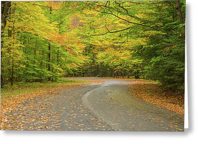 Road Passing Through A Park, Chestnut Greeting Card