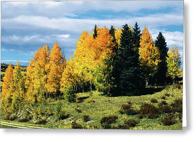 Road Passing Through Aspen Grove Greeting Card by Panoramic Images