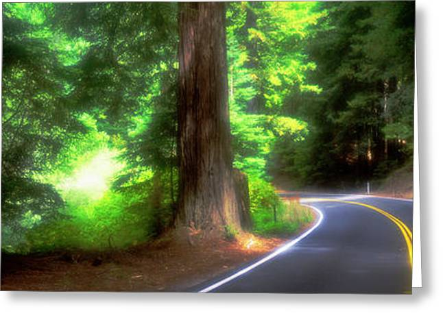 Road, Redwoods, Mendocino County Greeting Card by Panoramic Images