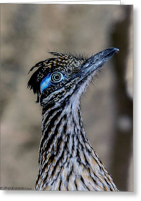 Greeting Card featuring the photograph Road Runner by Elaine Malott